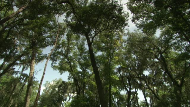 lush trees grow around the okefenokee swamp in florida. - オケフェノキー国立野生生物保護区点の映像素材/bロール