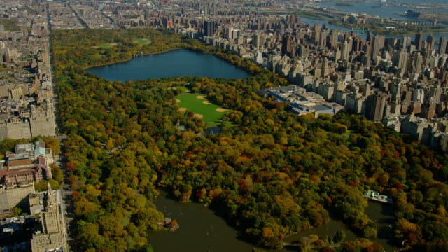 lush trees in central park surround the central park reservoir. - central park reservoir stock videos and b-roll footage