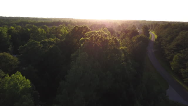 lush trees in georgia, aerial - georgia country stock videos and b-roll footage