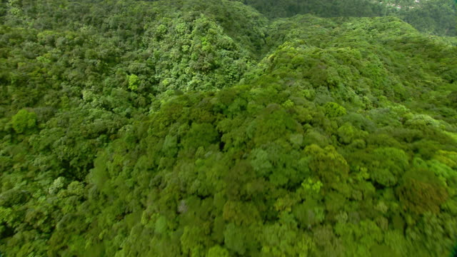 Lush tropical forest in the Morne Trois Pitons National Park on the Caribbean Island of Dominica.