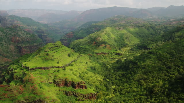 Lush vegetation fills the Waimea Canyon in Hawaii.