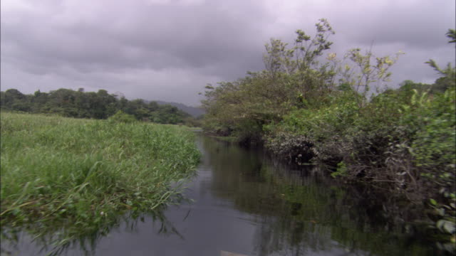 lush vegetation grows along a river in wetlands. - french guiana stock videos & royalty-free footage