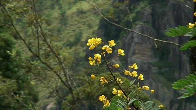 CU ZO WS Lush vegetation in mountains / Haputale, Sri Lanka
