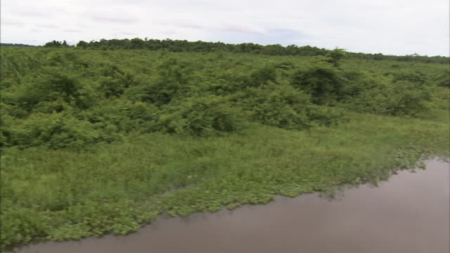 lush vegetation lines an african coastal inlet. - inlet stock videos & royalty-free footage