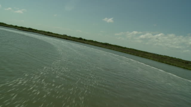 lush vegetation lines the gulf of mexico. - golf von mexiko stock-videos und b-roll-filmmaterial