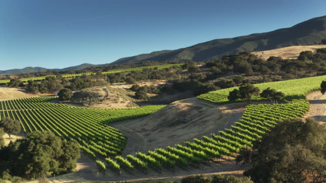 lush vineyards among dusty hills in monterey county, california - drone shot - monterey county stock videos and b-roll footage