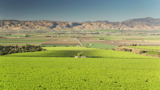 lush vineyards and valley farms in monterey county, northern california - drone shot - monterey county stock videos and b-roll footage