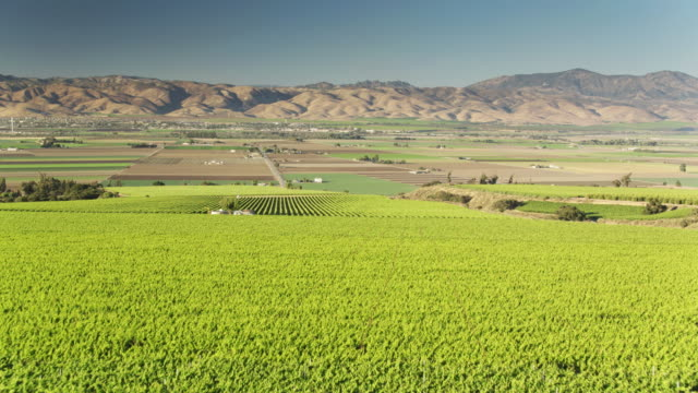lush vineyards and valley farms near soledad, monterey county, northern california - aerial shot - monterey county stock videos and b-roll footage