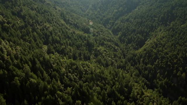 vídeos de stock, filmes e b-roll de lushly forested evergreen forest in humboldt redwoods state park, california. - parque estatal de humboldt redwoods