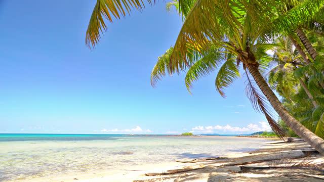 luxury empty tropical island. beach. palm tree - tropical tree stock videos & royalty-free footage