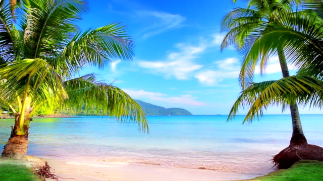 luxury tropical beach. - caribbean sea stock videos & royalty-free footage