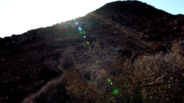 vídeos y material grabado en eventos de stock de lycium intricatum en caldera de los arrabales, fuerteventura - islas canarias cono volcánico - caldera cráter