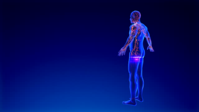 lymphatic system - the human body stock videos & royalty-free footage
