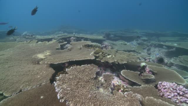 , maamigili, south ari atoll, the maldives - ari atoll stock videos & royalty-free footage