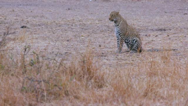 Maasai Mara 4 Sept 16 Pm