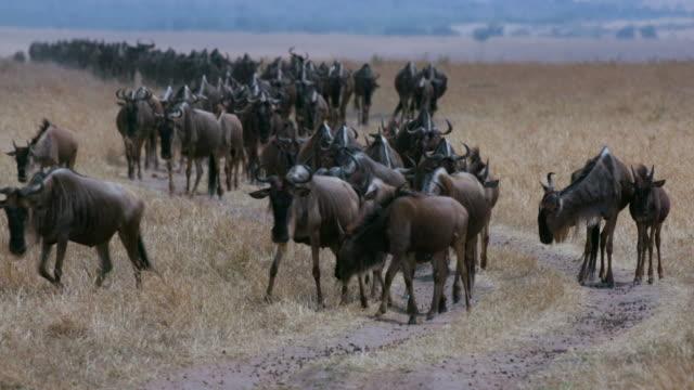 Maasai Mara 4th September 2016