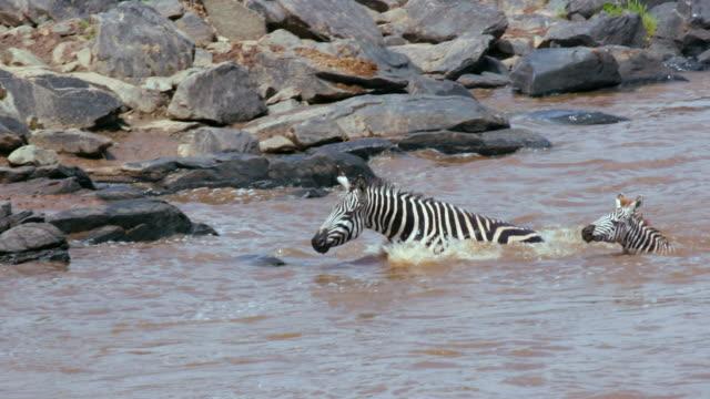 Maasai Mara 6 Sept Am