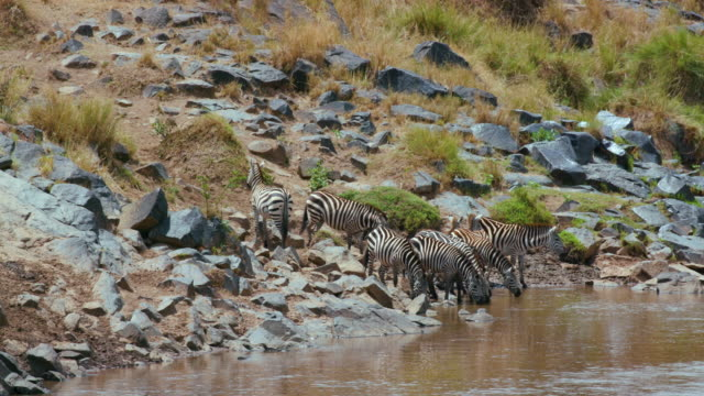 maasai mara 6 sept pm - animal call stock videos & royalty-free footage