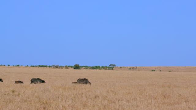Maasai Mara 7 Sept 16 Am