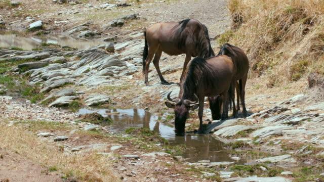 maasai mara 7 sept 16 am - small group of animals stock videos & royalty-free footage