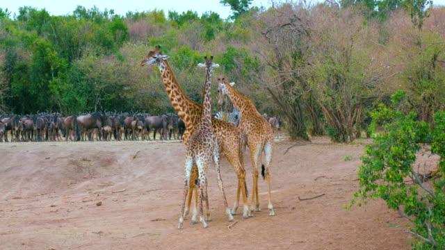 Maasai Mara 7 Sept 16 Pm