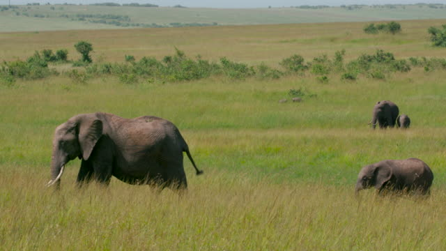 Maasai Mara