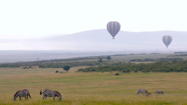 maasai mara - zebra stock-videos und b-roll-filmmaterial