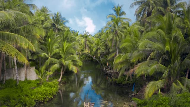 maasin river bended tree - coconut palm tree stock videos & royalty-free footage