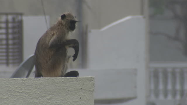 stockvideo's en b-roll-footage met a macaque at the edge of a ledge opens its mouth to yawn. available in hd. - bhopal