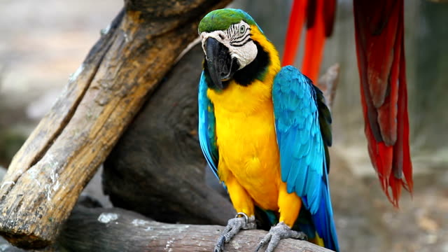 macaw bird - parrot stock videos & royalty-free footage