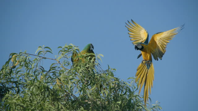 macaw fly on a tree slow motion - bird stock videos & royalty-free footage