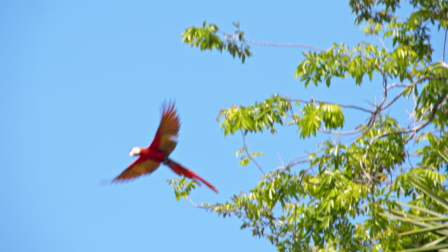 ls macaw flying on a tree - parrot stock videos & royalty-free footage