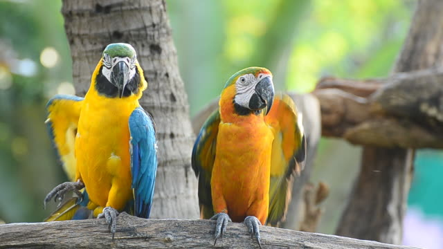 macaw in the nature - two animals stock videos and b-roll footage