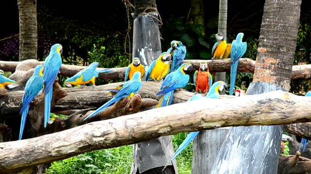 stockvideo's en b-roll-footage met macaw in the nature - dierentuin