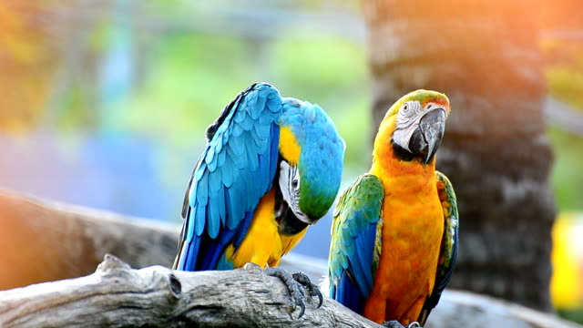 macaw in the nature - macaw stock videos & royalty-free footage