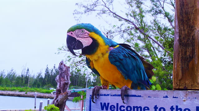 macaw perching on fence - perching stock videos & royalty-free footage