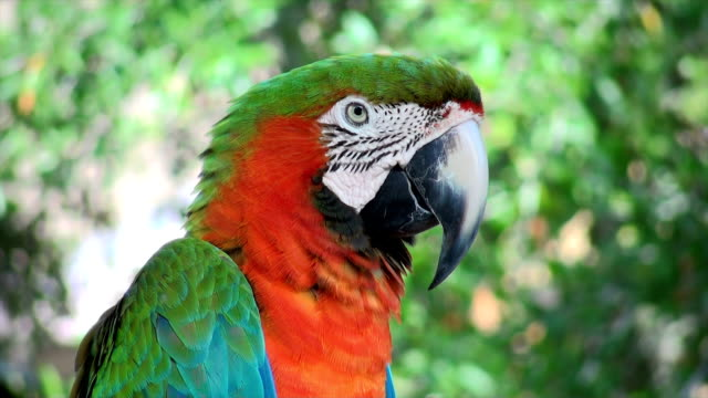 macaw red green - cabo san lucas stock videos and b-roll footage
