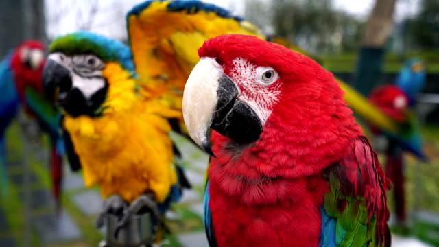stockvideo's en b-roll-footage met macaw - neerstrijken