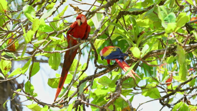 MS Macaws on a tree