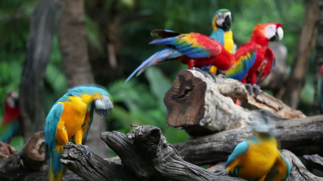 macaws - rainforest stock videos & royalty-free footage