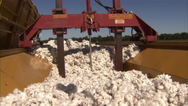 cu of machine compacting harvested cotton trailer. - cotton stock videos & royalty-free footage