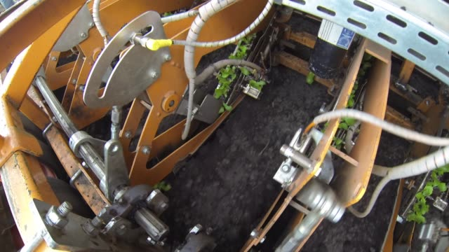 machine planting lettuce on a farm - agricultural equipment stock videos & royalty-free footage