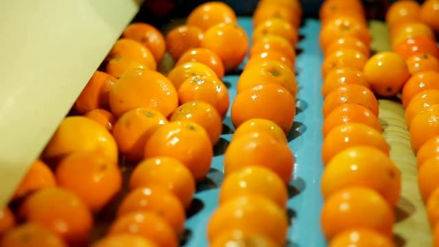 máquina funcionando em インダストリア デ laranja - オレンジ果樹園点の映像素材/bロール