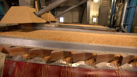 vídeos y material grabado en eventos de stock de a machine shakes corn seed through several tracks. - cereal plant
