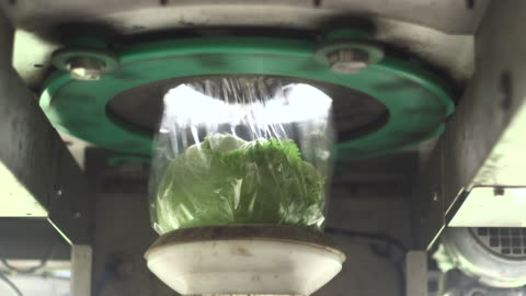 machine wraps iceberg lettuces in plastic, uk - packaging stock videos & royalty-free footage