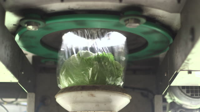 "machine wraps iceberg lettuces in plastic, uk - ""bbc natural history"" video stock e b–roll"