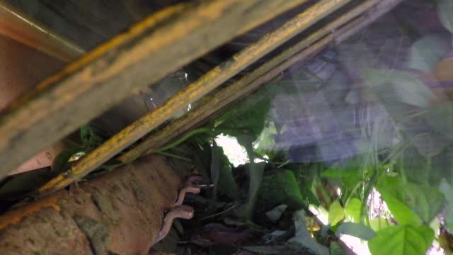 machinery harvests green bean crop in field, uk - green bean stock videos & royalty-free footage