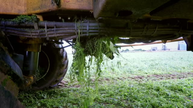 machinery harvests peas from a field - agricultural machinery stock videos & royalty-free footage
