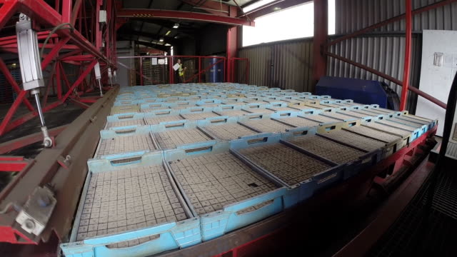 tl machinery lifts crated seedling lettuce plants, uk - factory stock videos & royalty-free footage