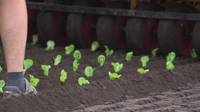 machinery plants seedling lettuce plants in field, uk - currency symbol stock videos & royalty-free footage
